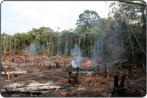 Der Freihandel – Angriff auf Klimaschutz und Menschenrechte?!