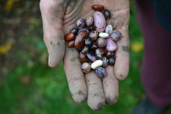 Freier Zugang zum Saatgut als Grundlage für Ernährungssouveränität